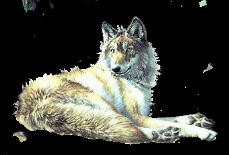 """Résultat de recherche d'images pour """"tubes loups blanc"""""""
